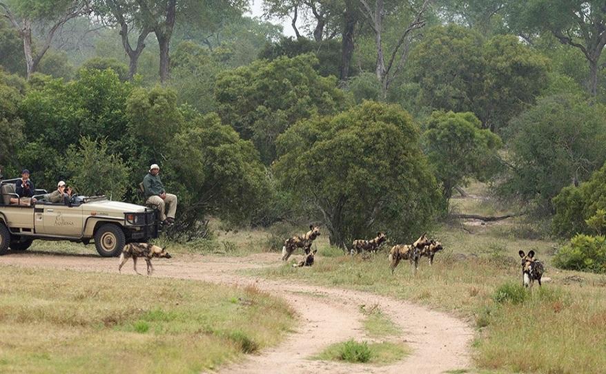 Game Drives and Walking Safaris