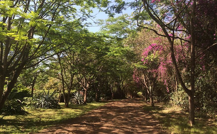 Moivaro Coffee Plantation Lane
