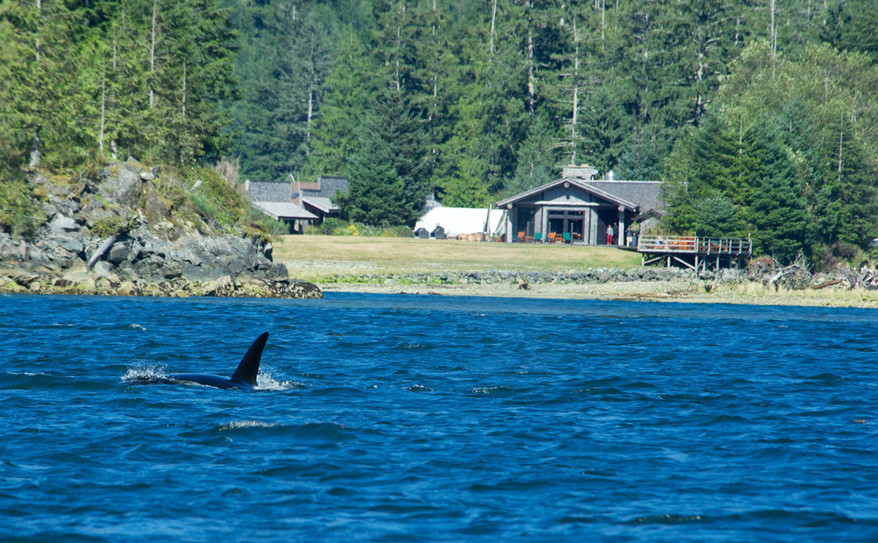 an orca comes to the resort for a visit