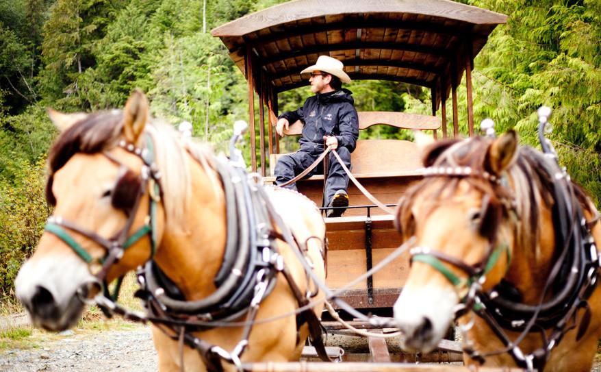 cowboy_wagon_draft_horses