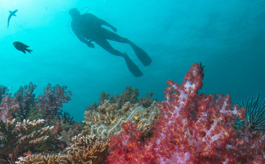 Padi Snorkelling & Dive